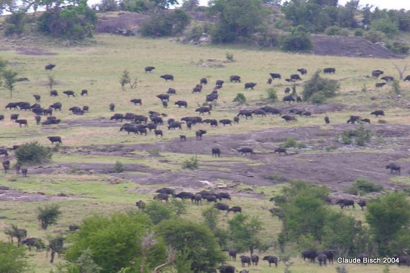 Un rassemblement vers Lobo Safari Lodge
