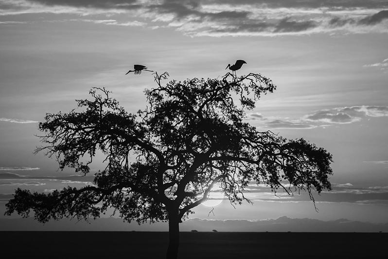 Petit matin calme à Masaï Mara. Lever de soleil avec jabirus du Sénégal
