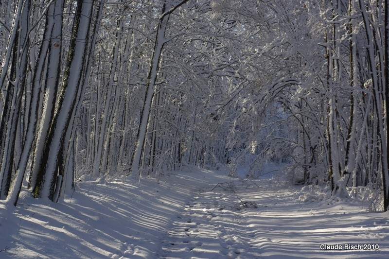 Lignes dans la neige