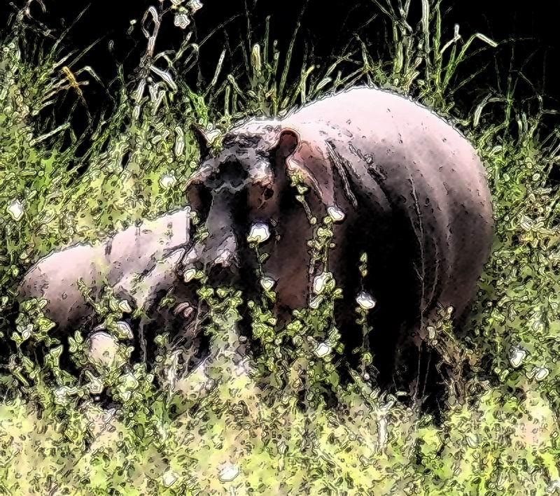 Hippopotames à Sopa, Serengetti, Yanzanie
