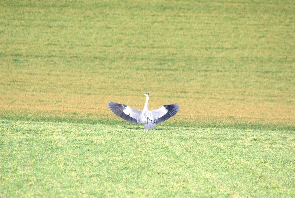 Contact ( landing ...)