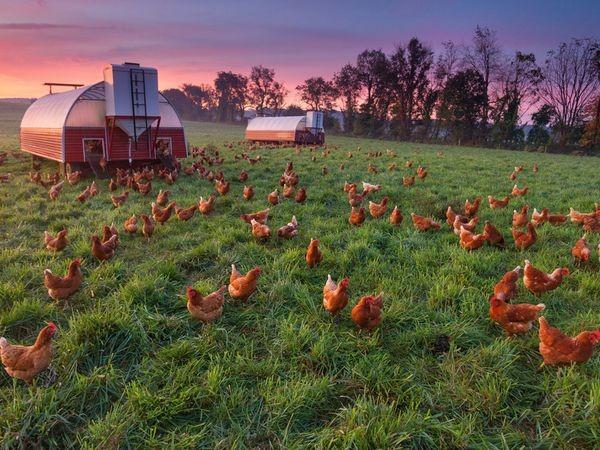 сельская жизнь в фотографиях