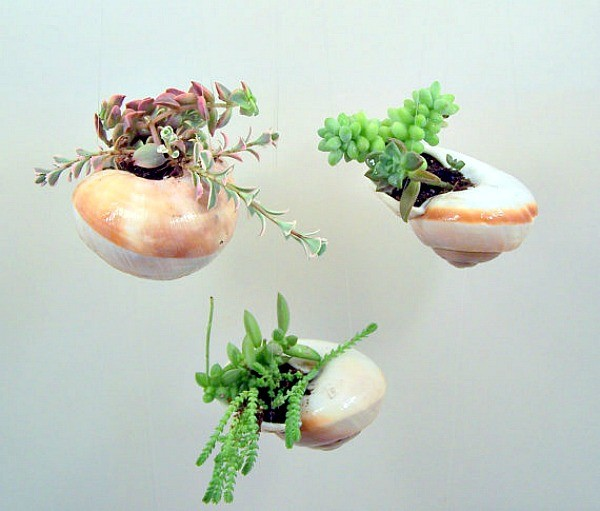 Морские мотивы в саду