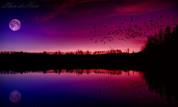 Размышления на озере grauges