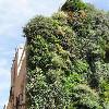 Вертикальные сады как городское искусство