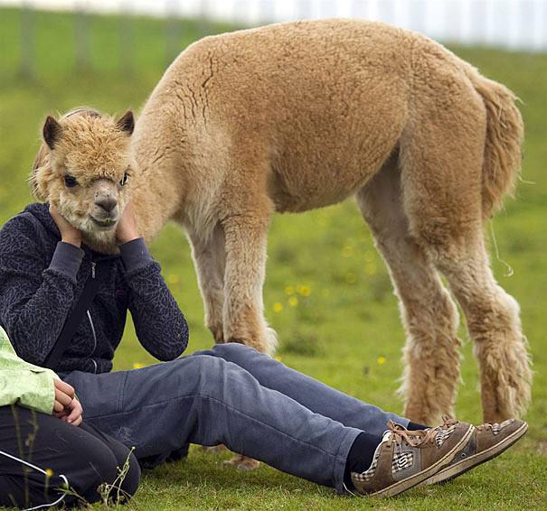 животные в фотографии