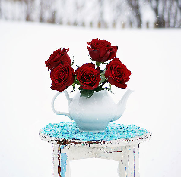 зимние натюрморты в фотографиях