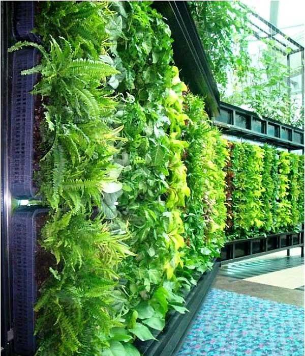 ветрикальные сады