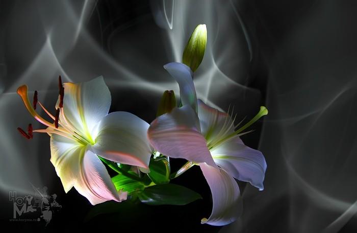 Картинки с цветами лилии анимация, необычных