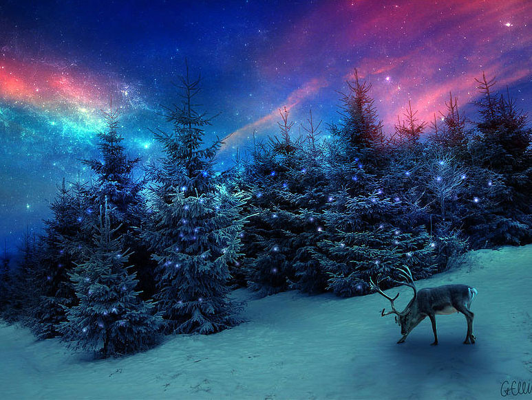 картинки ночь лес новый год держит свою личную