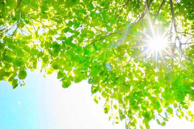 太陽の光 光触媒は光に反応して強力な酸化作用をもつフリーラジカルを生成