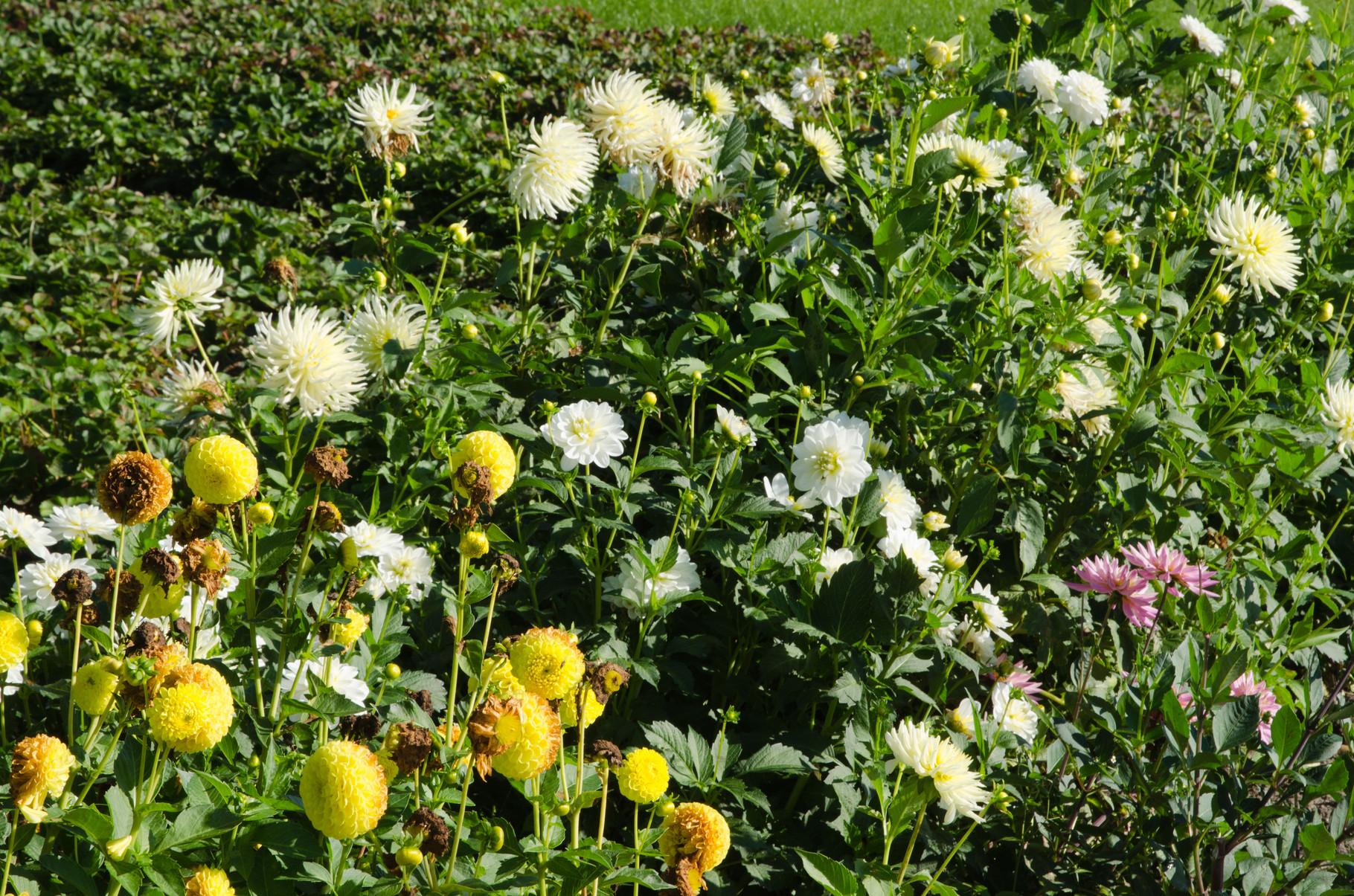 bloemenpluktuin