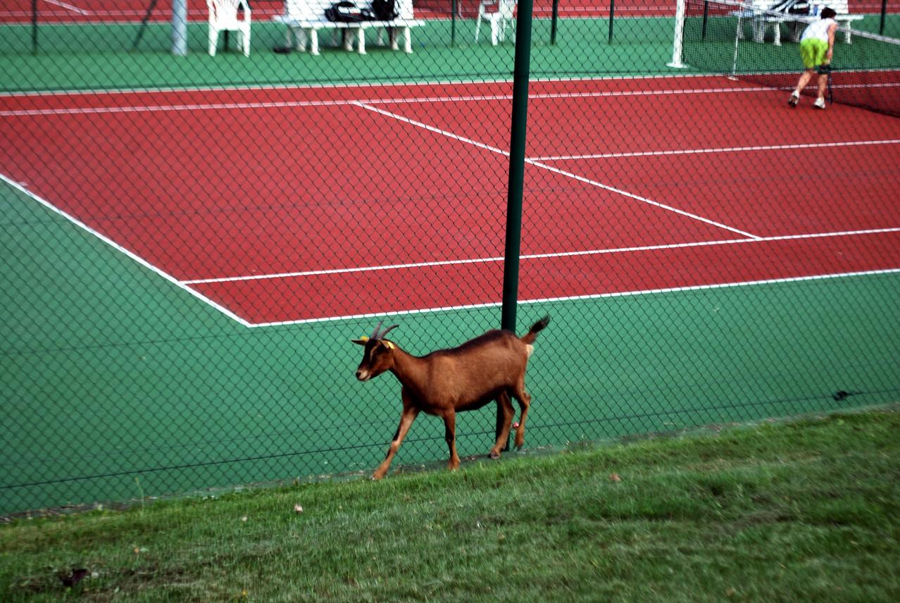 """""""Moi je vêêê aller voir s'ils jouent pas comme des chèvres sur ce court..."""""""