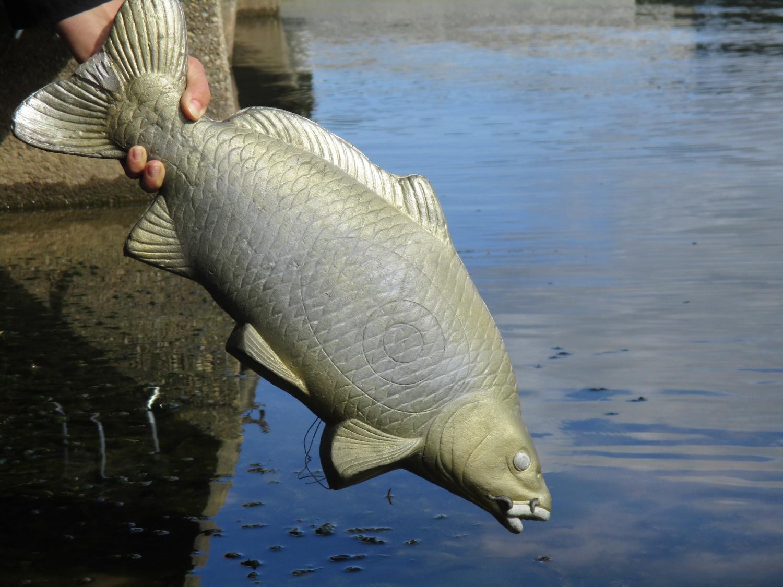 Projet photo : Le petit pêcheur - CM1-CM2 école publique les trois rivières de Breteil