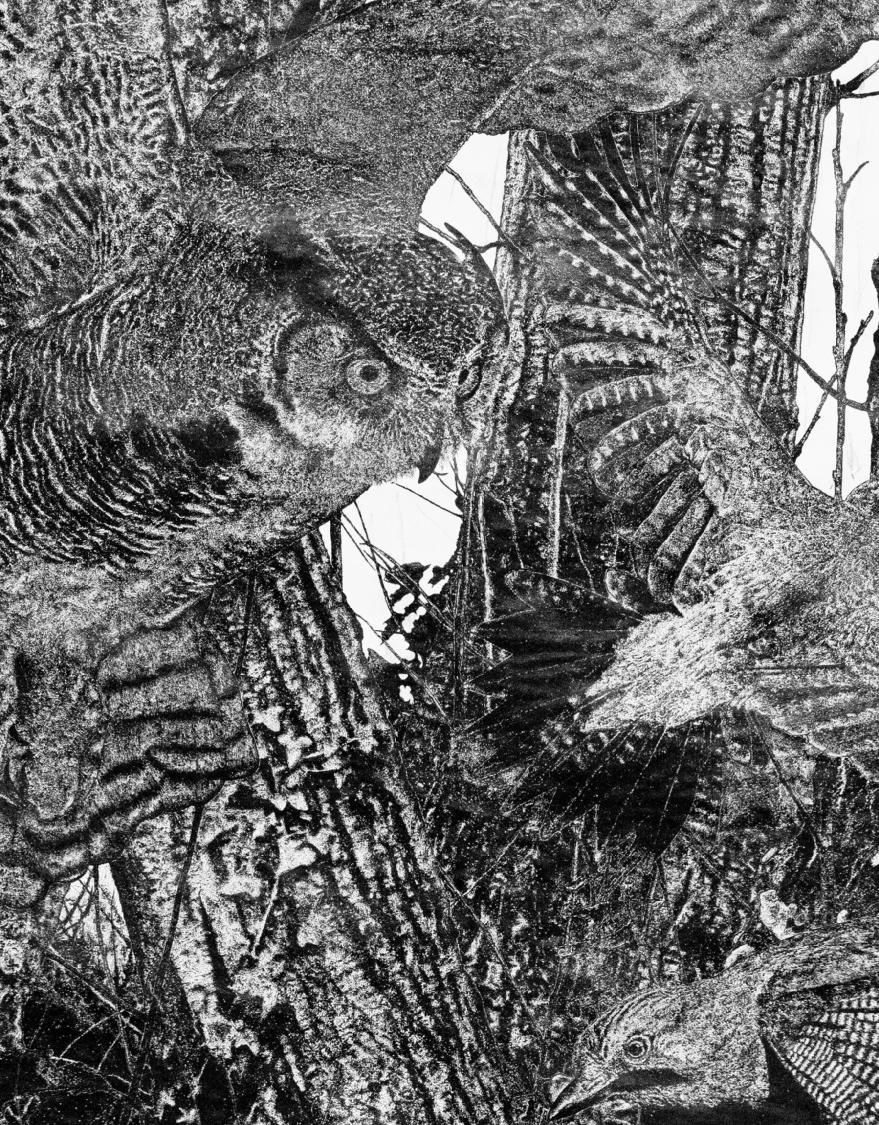 Quentin Montagne, Into the Woods, encre de Chine sur papier, détail, 2020.
