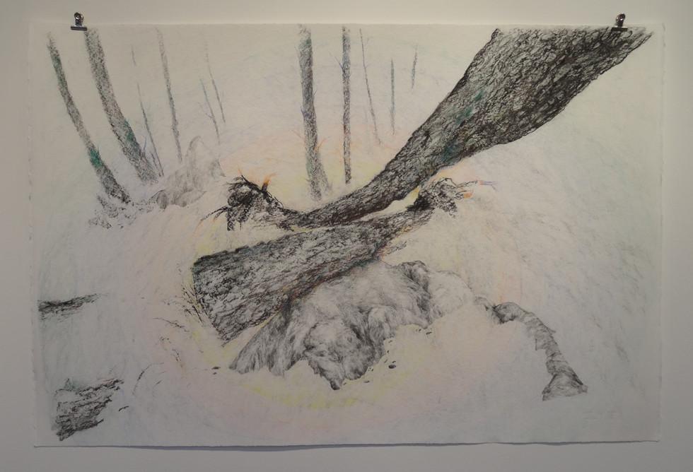 Noémie Sauve, Végétal VS Minéral - Dessin sur papier moulin du gué, 130x80cm, 2015. Mine graphite, fusain, Bic, crayon de couleur