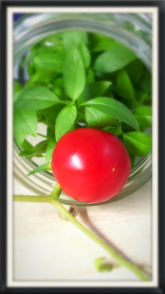 Erste Ernte Tomaten & ThaiBasilico