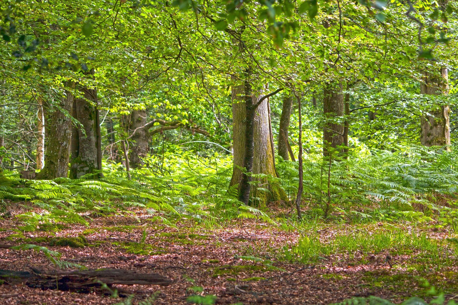 Was bedeutet Pionierbaumart? Welche Eigenschaften haben Pionierbäume? Und was ist ein Vorwald?