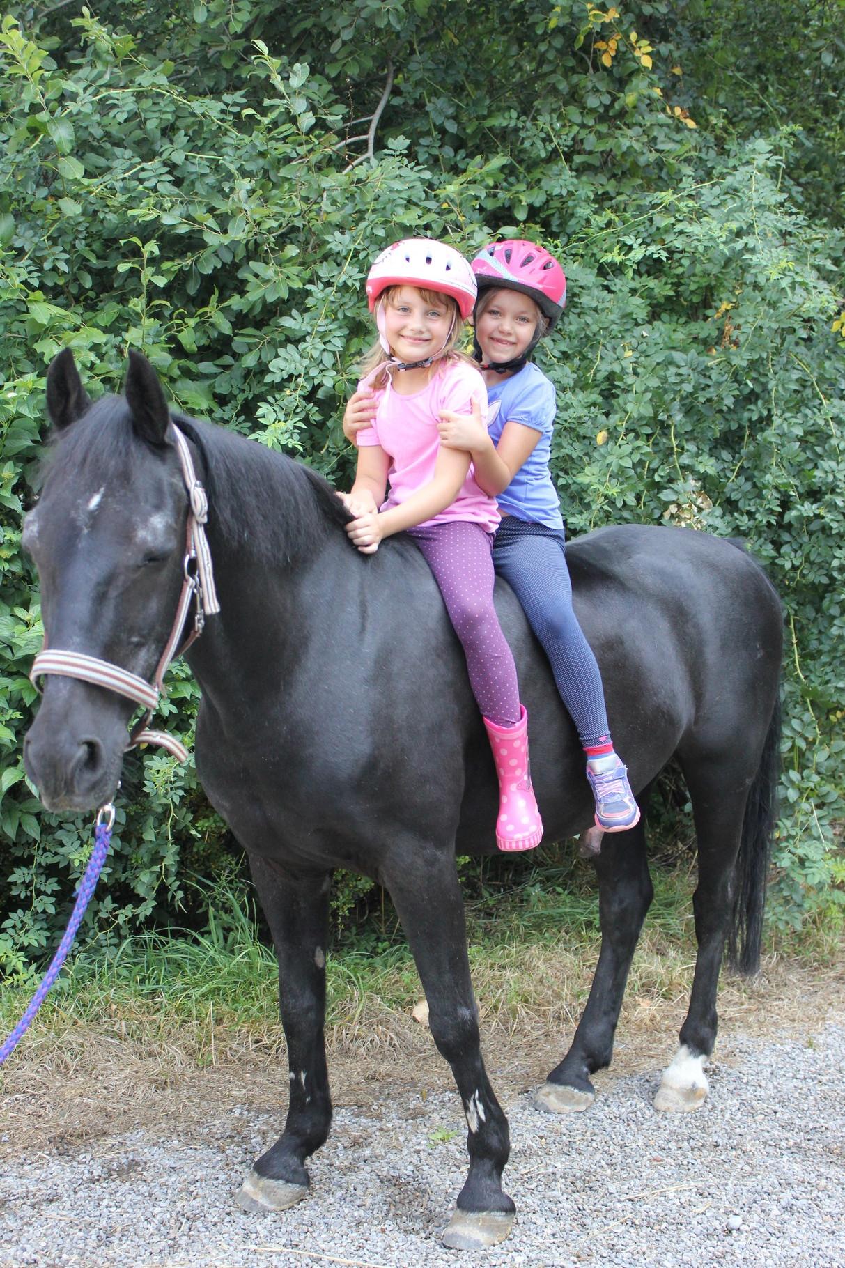 Zum Glück ist das Pferd lang genug!