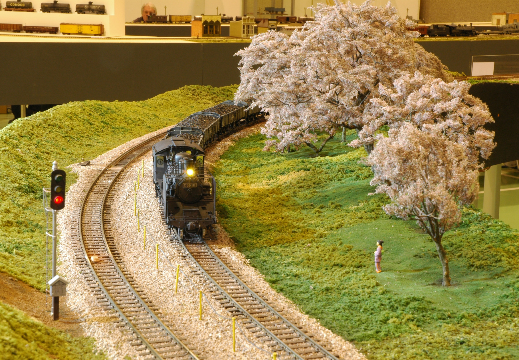 C56 passing the cherry blossom trees