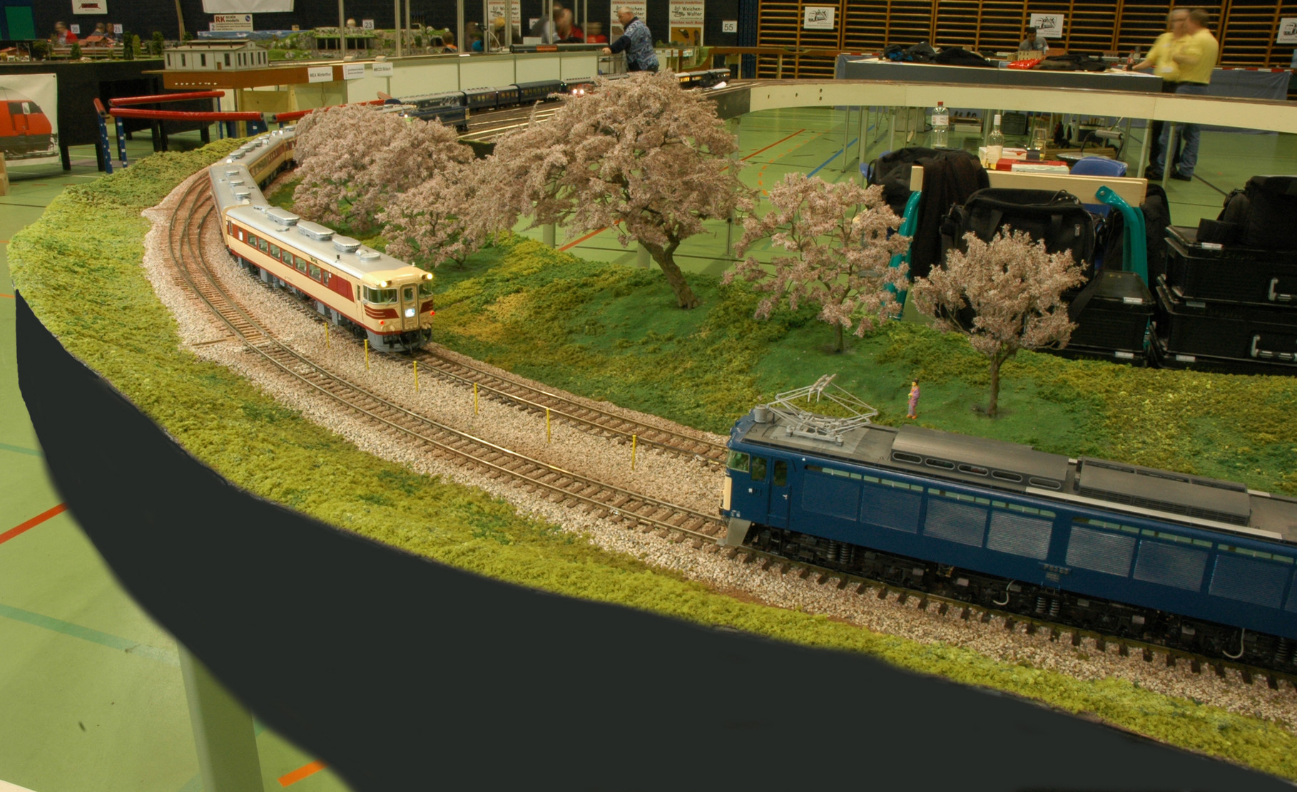 Kiha 82 + EF-63 under the cherry blossom trees. Olten 2013