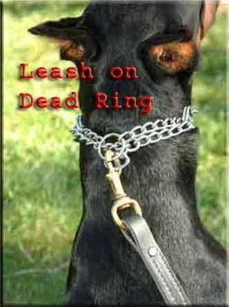 На этом фото показано, как пристёгивать карабин к «мёртвому» кольцу строгого ошейника