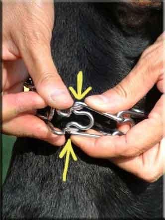 На этом фото показано, как сжать звено и снять ошейник с шеи собаки.