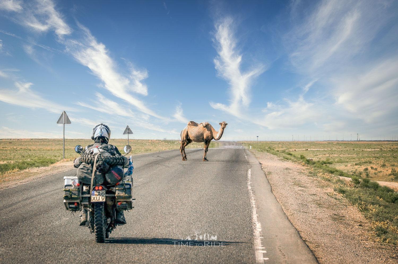 Man soll den Tag nicht vor dem Abend loben - Reisebericht Kasachstan