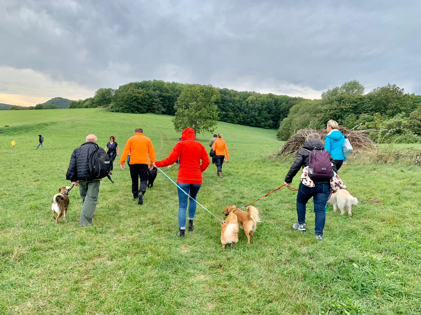 Start in den Tag, die Gruppe beginnt beim gemeinsamen Gehen Ruhe in die Hunde zu bringen