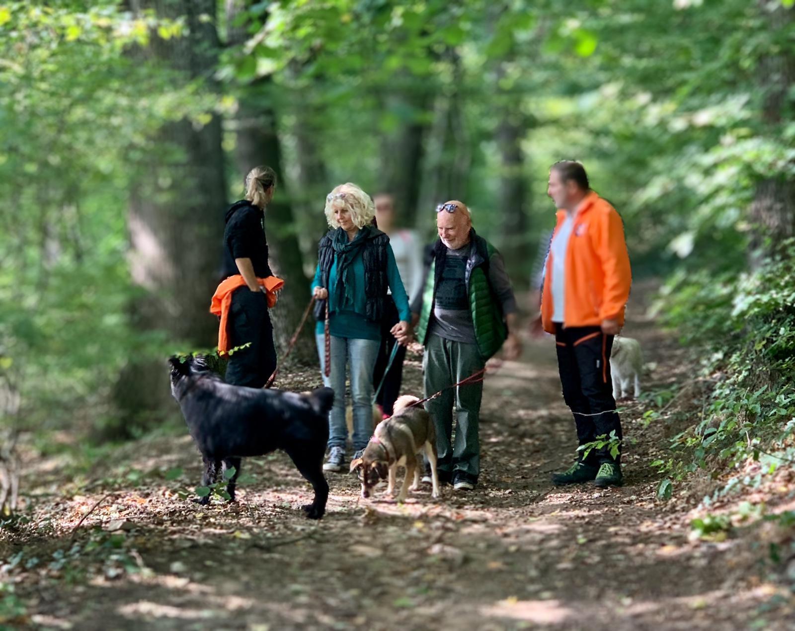 Im Wald beim kontrollierten Spaziergang