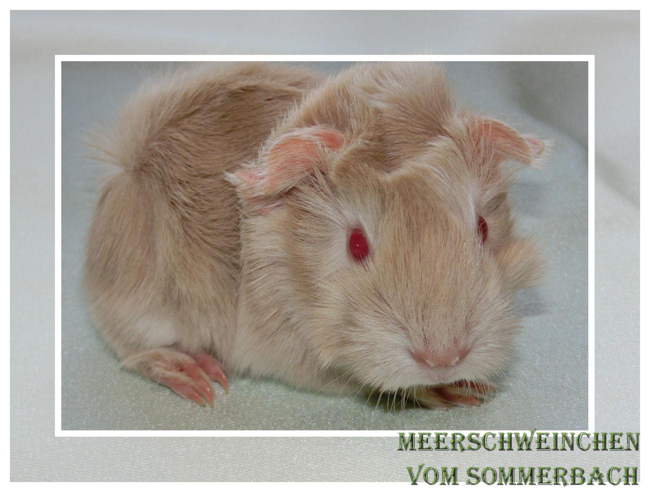 Éowyn vom Sommerbach 1 Tag nach ihrer Geburt
