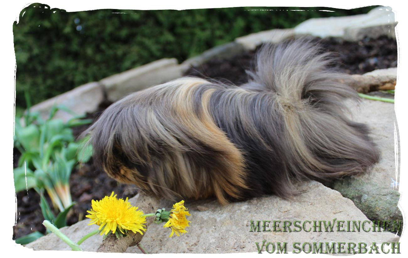 Edgar vom Sommerbach, 3 Monate alt