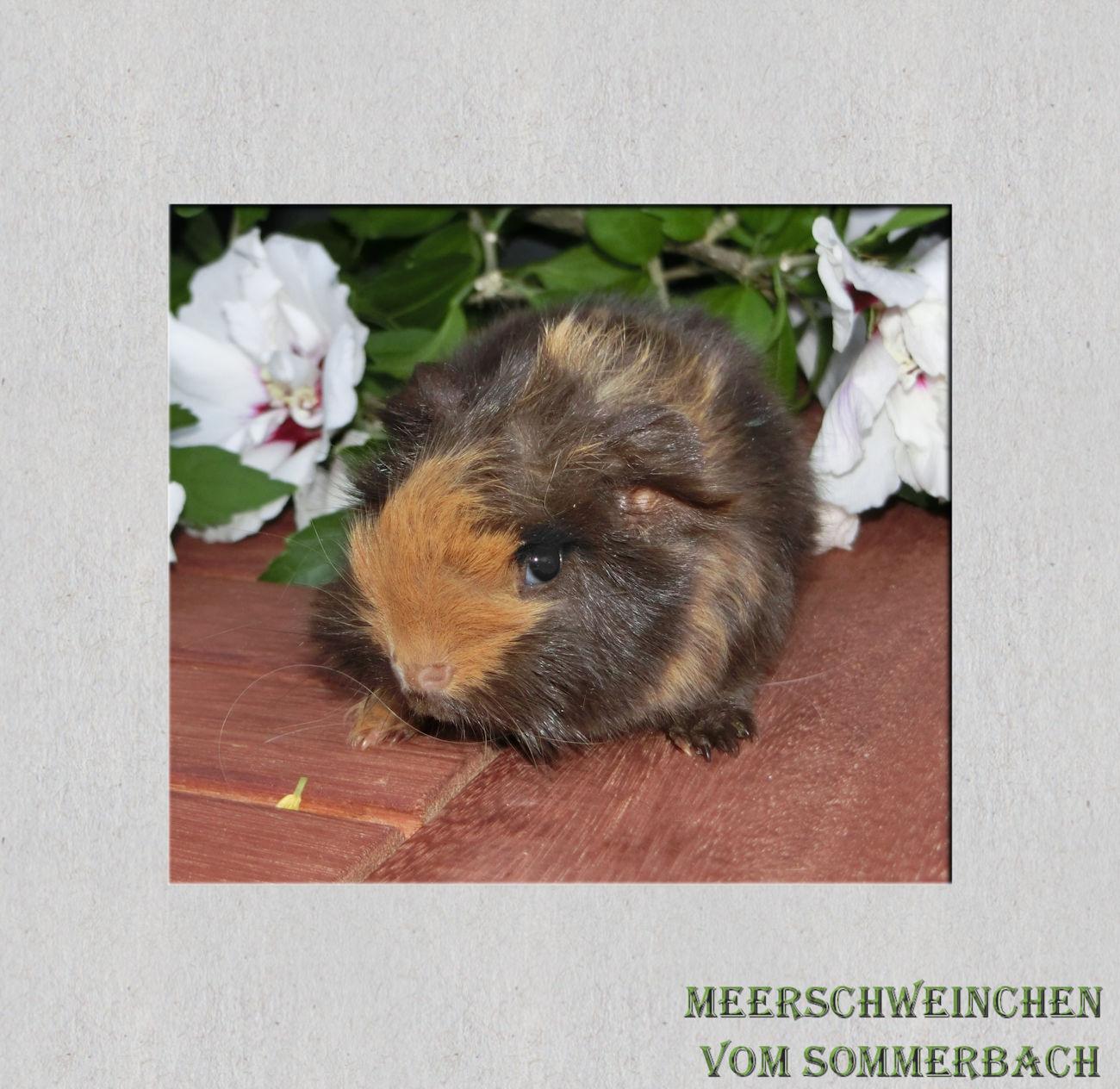 Hagrid vom Sommerbach 2 Wochen alt