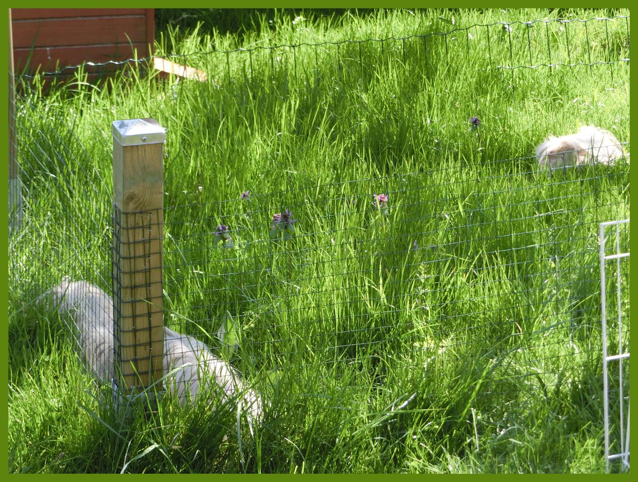 """Der Außenbereich in 05/2016 ist jetzt eingewchsen. Genug Gras zum """"abmähen"""""""