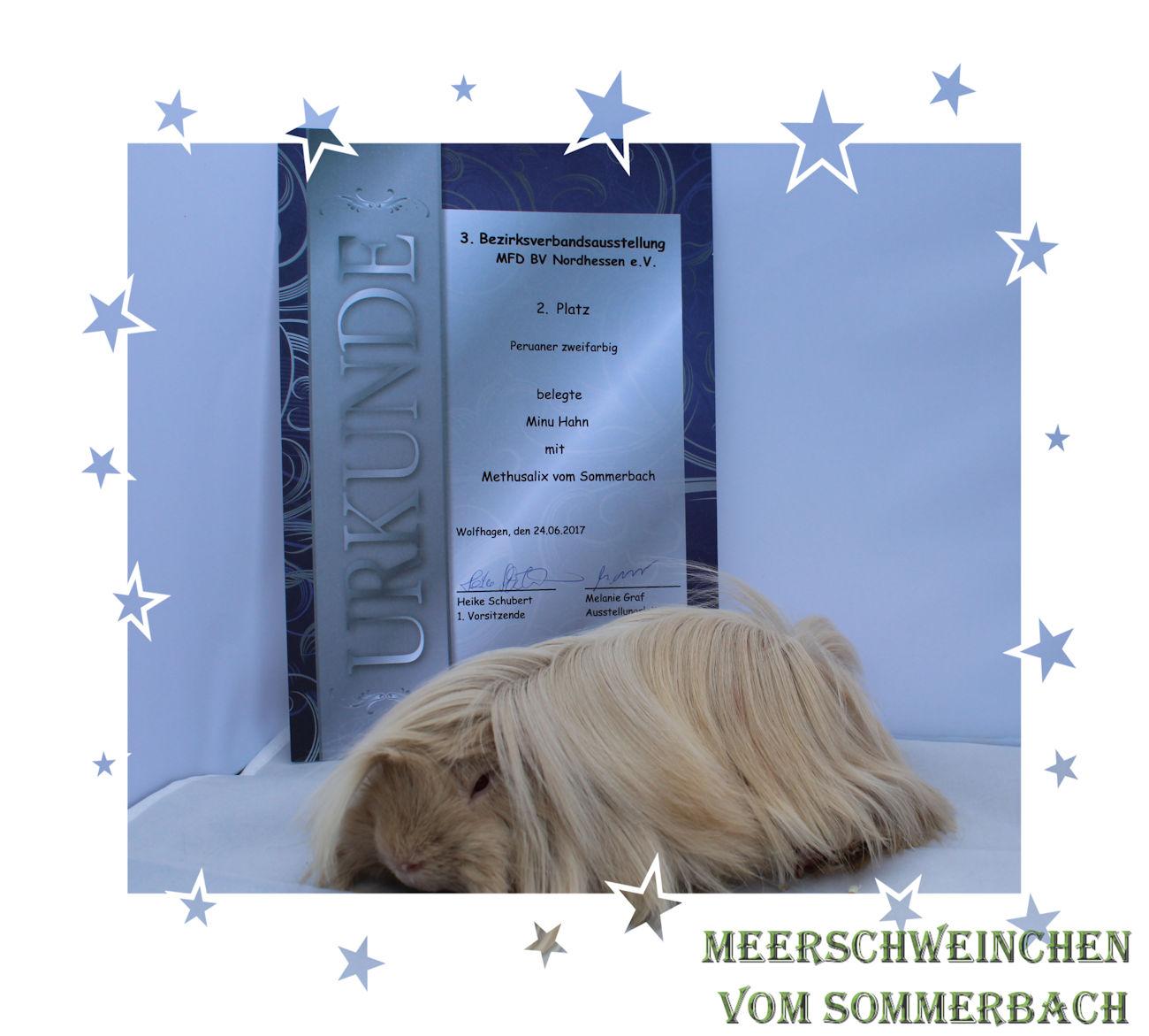 Methusalix vom Sommerbach mit Urkunde vom 24.06.17