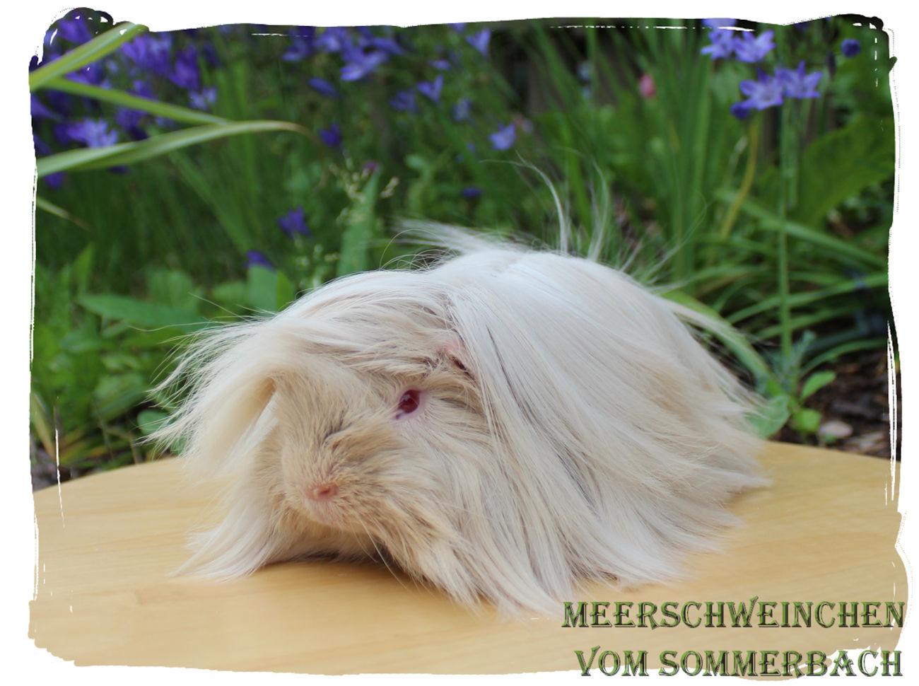 Methusalix vom Sommerbach, 3,5 Monate alt