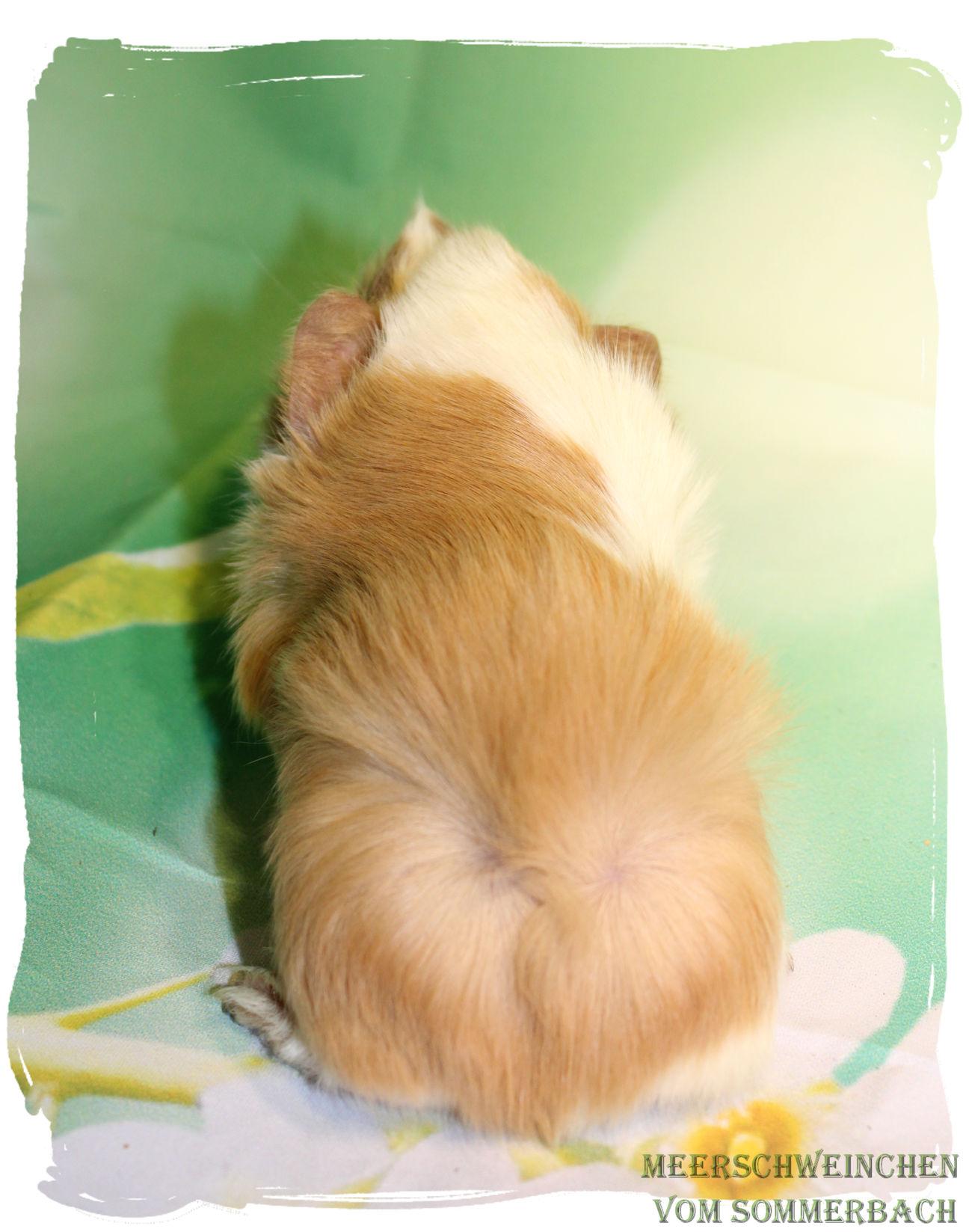 Maitai vom Sommerbach, 1,5 Wochen alt