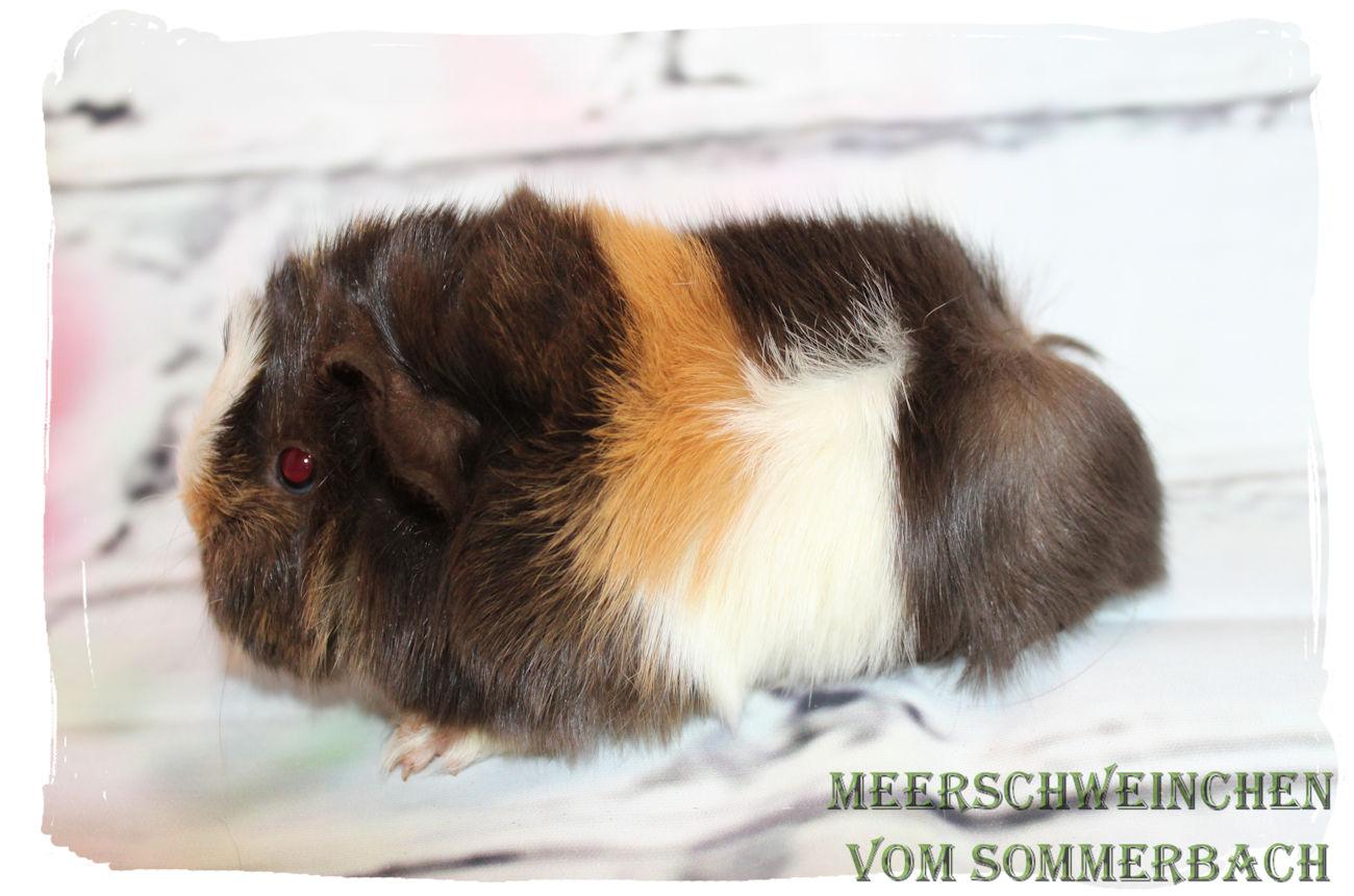 Hampus vom Sommerbach, 2 Wochen alt