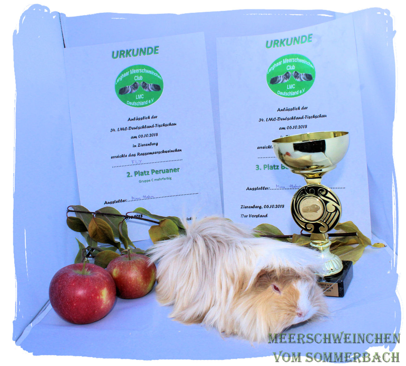 """Fly vom Sommerbach, 06.10.18, 3. Platz """"Bester Peruaner"""", 2. Platz """"Peruaner Gruppe C mehrfarbig"""""""