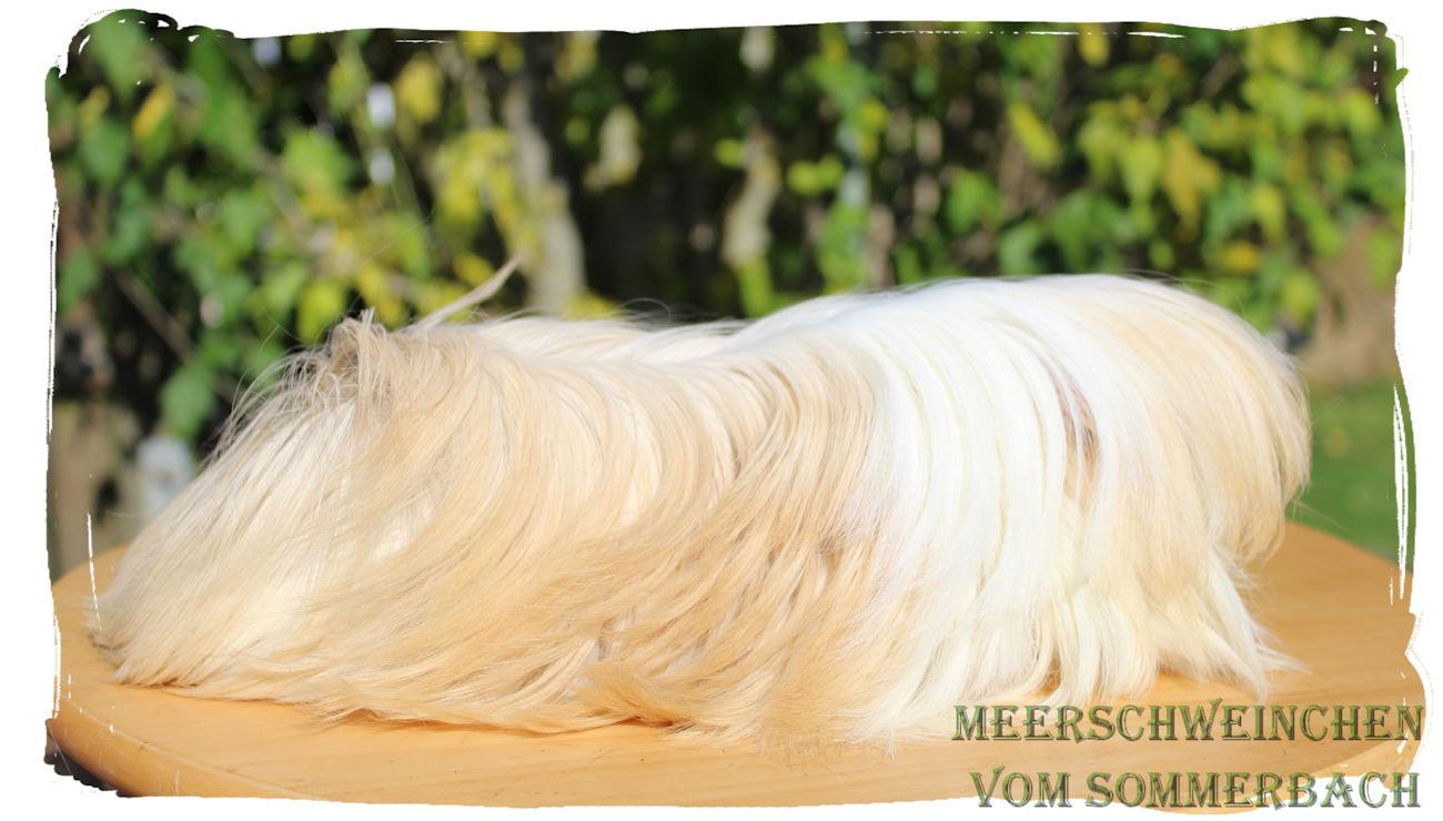 Ramses vom Sommerbach 3,5 Monate alt