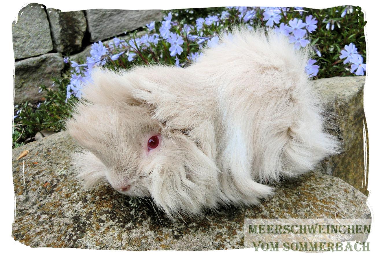 Methusalix vom Sommerbach, 6 Woche alt
