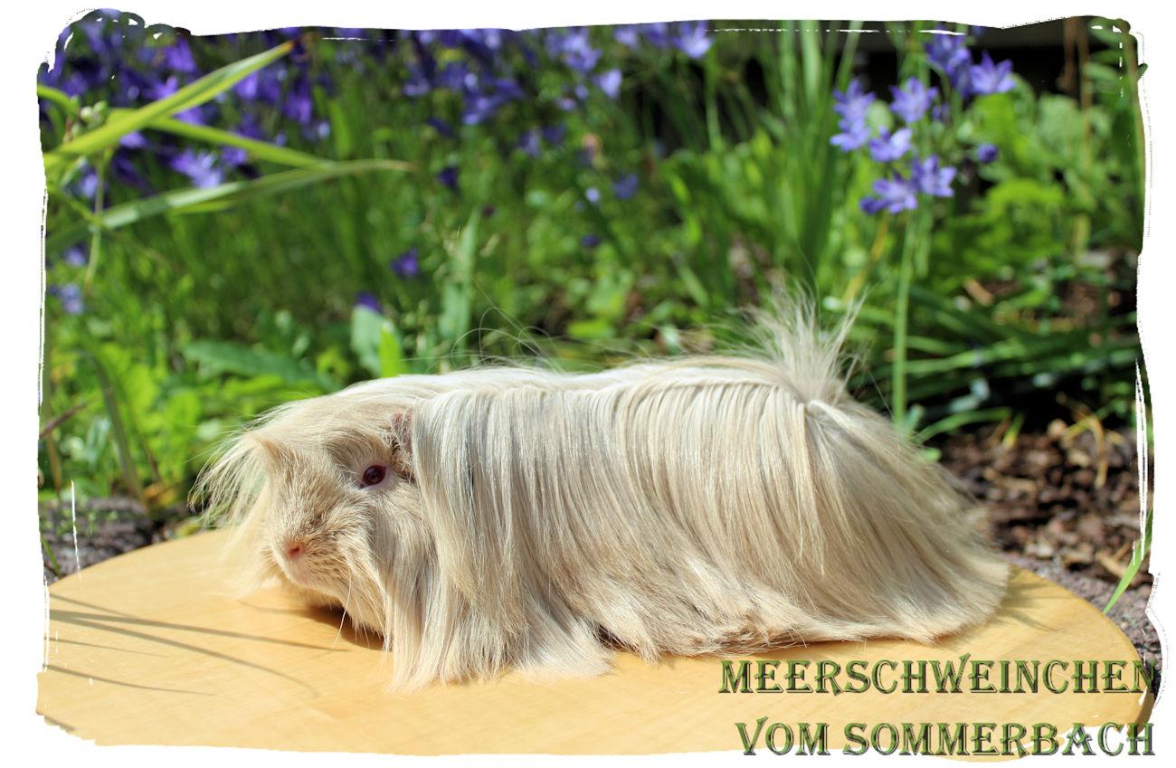 Majestix vom Sommerbach 3,5 Monate alt