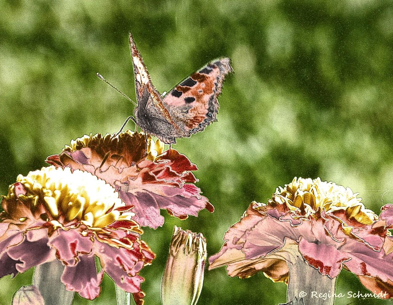 Schmetterling als Gemälde