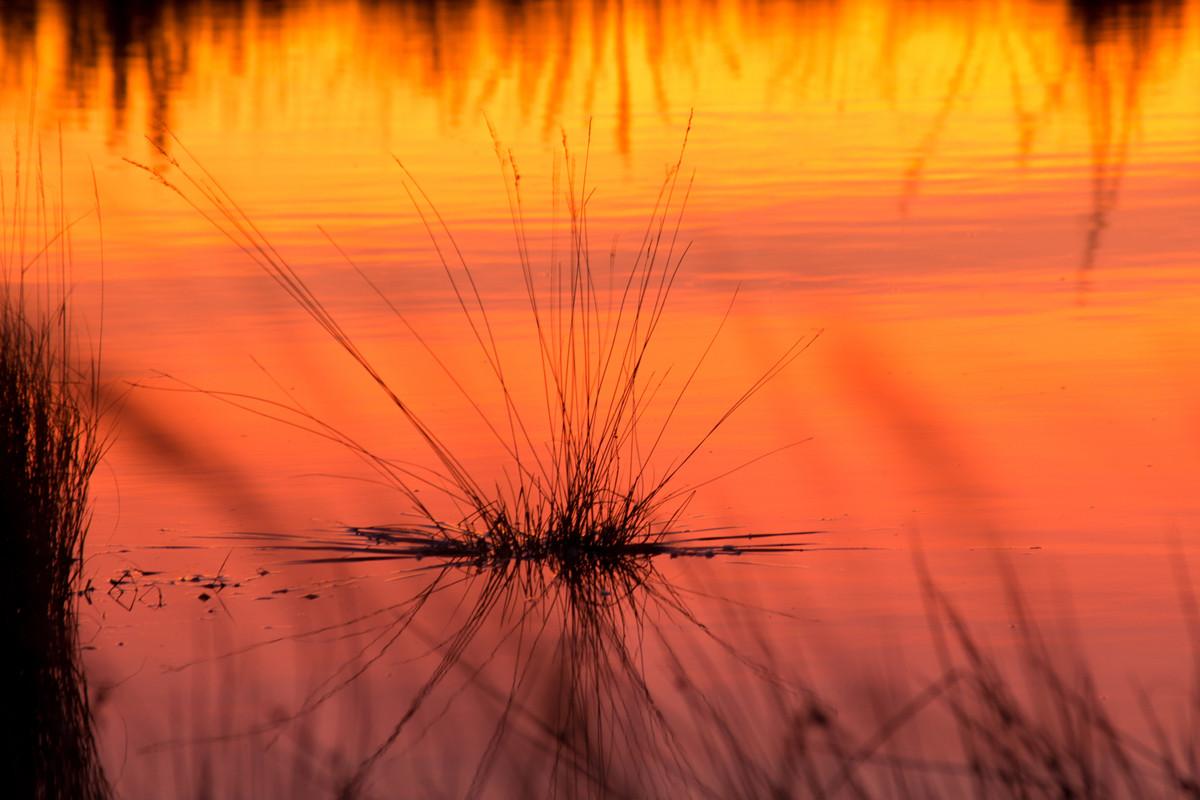 Morgenrot im Moorgelände