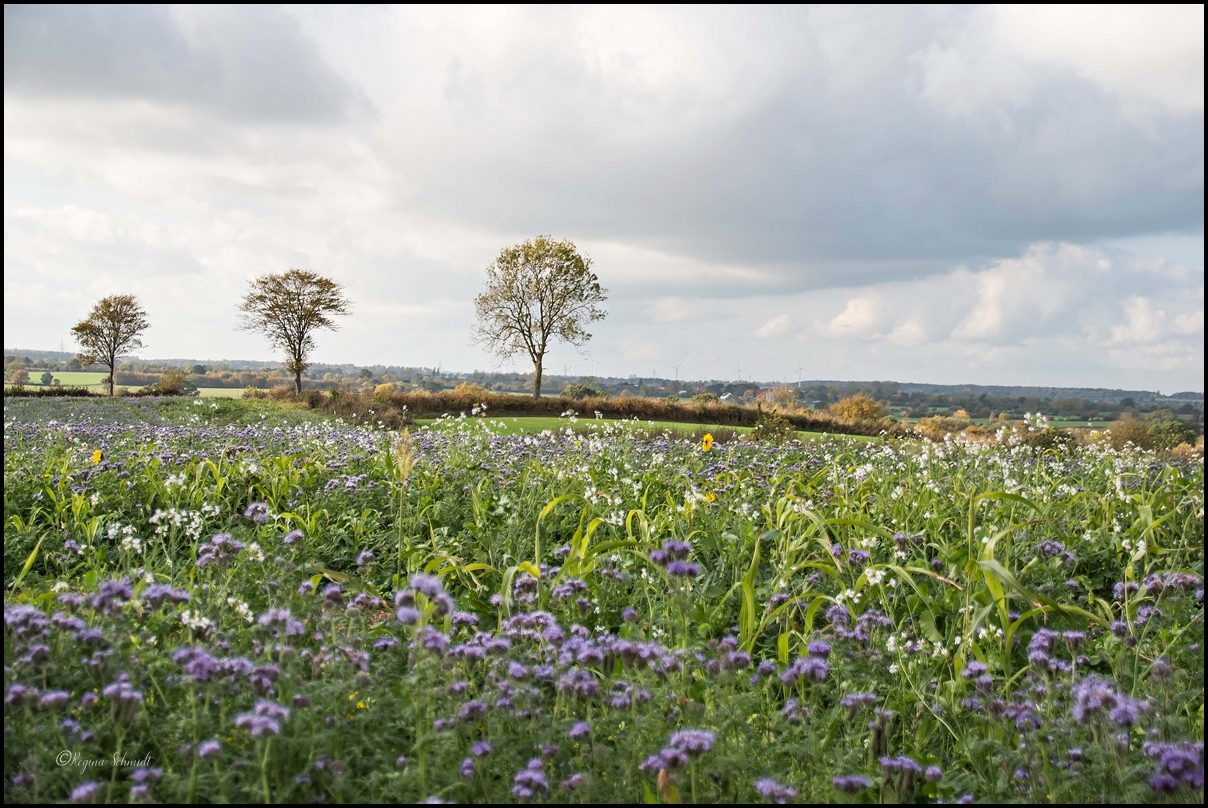 Blühende Felder Ende Oktober