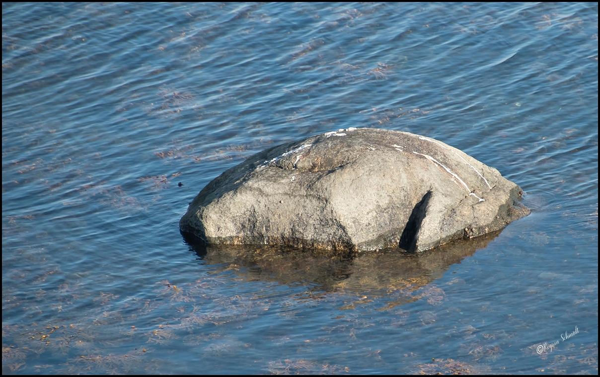Haifischkopf aus Stein
