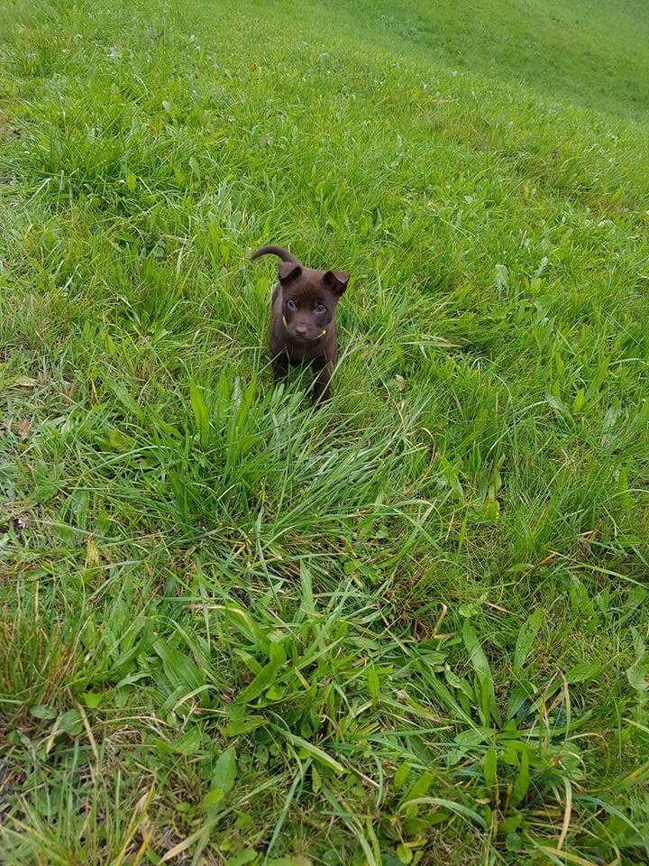 Im Gras rumflitzen