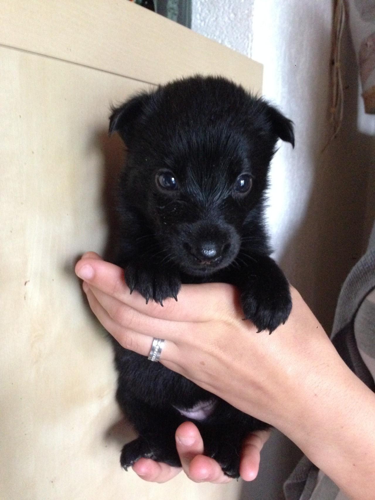 Quanira, 3 Wochen alt