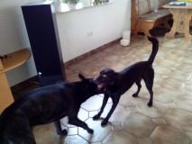 Nelix und Hunter