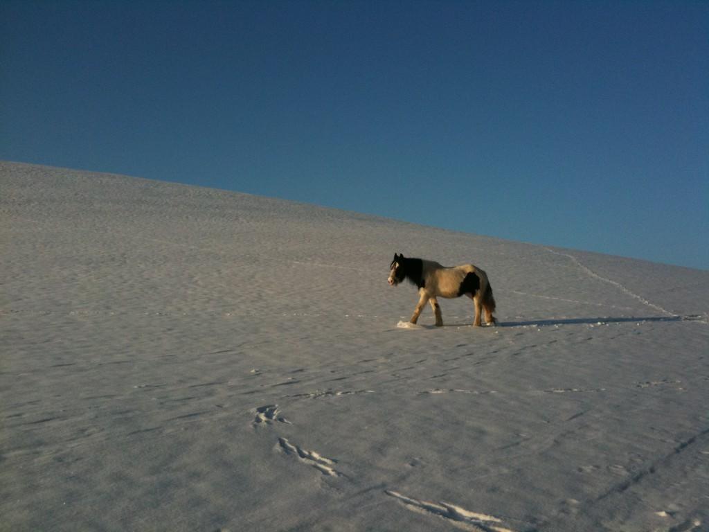 Cheyenne, Winter 2011, Gottschalkenberg
